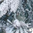 Напыление  искусственным  снегом